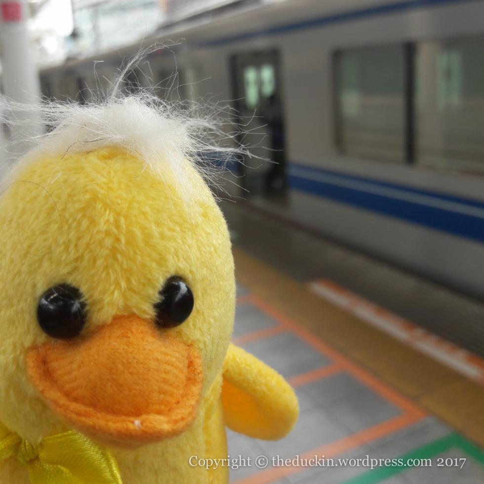 Duck photo 1